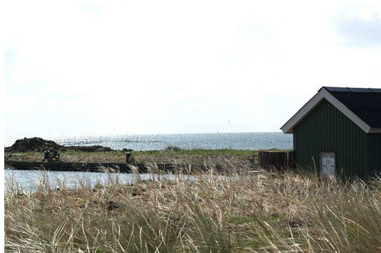 Billede af Hvide Sande Fiskesø