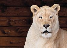 Billede af Blåvand Zoo