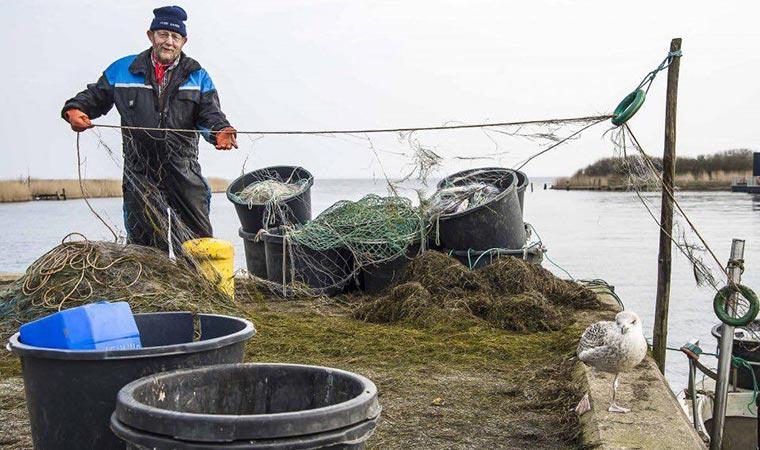 Stellnetzfischerei im Ringkøbing Fjord
