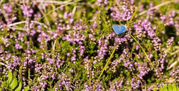 Skønt naturbillede fra sommerhusområdet Klegod.