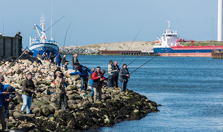 Lystfiskeri i Vestjyllnd ved molen i Hvide Sande