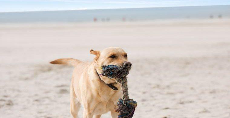Spiel mit deinem Hund am Strand
