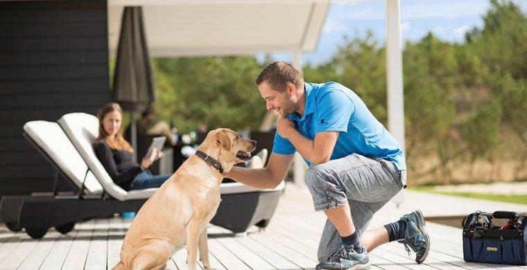 Ferienhäuser mit Hund in Dänemark