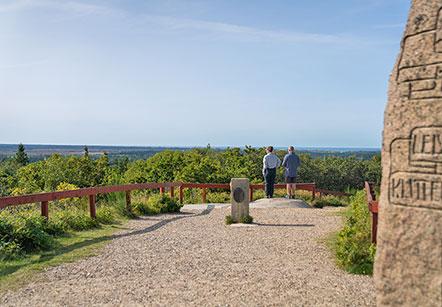 Blåbjerg Klitplantage