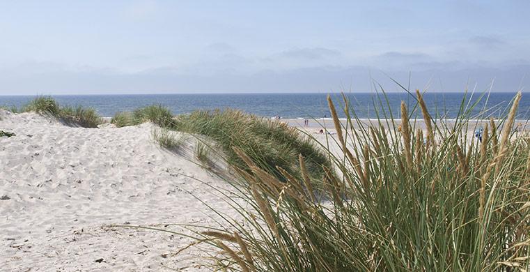 ferienhaus ferienwohnung in graerup strand urlaub in. Black Bedroom Furniture Sets. Home Design Ideas