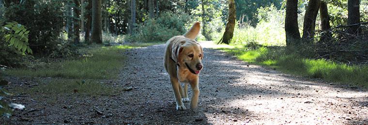 Hund im Wald in Dänemark