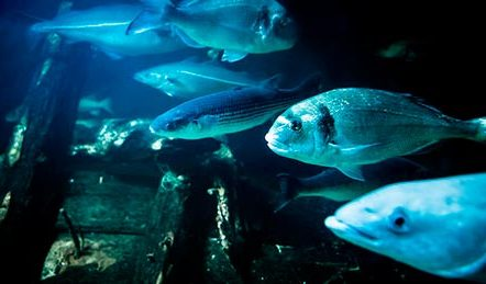 Jyllands Aquarium