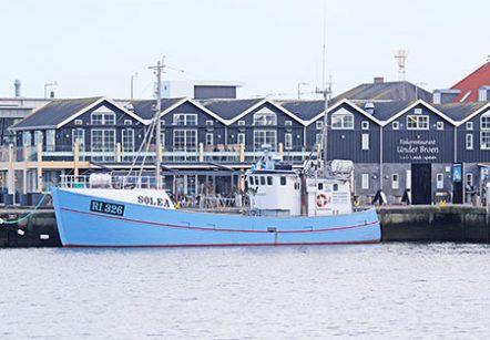 Fischkutter M/S Solea, ab Hvide Sande
