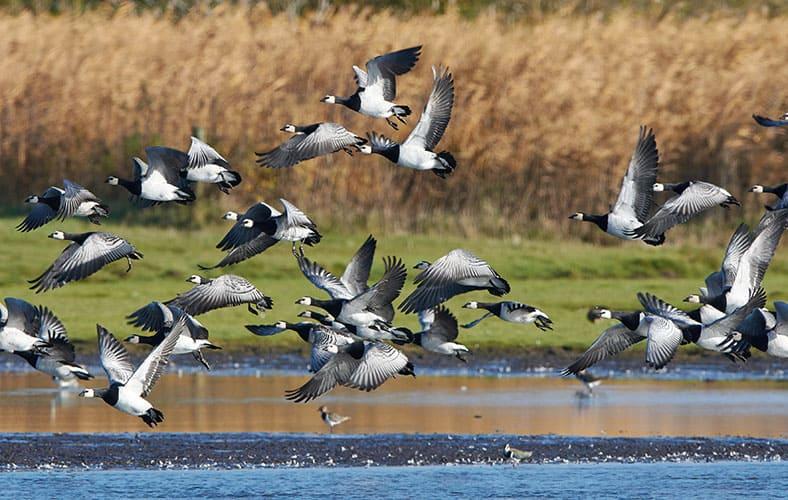 Vogelreservat Tipperne